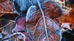 frost on leaf 2