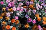 542-flower-garden