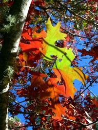 Red Oak Halloween2 2010